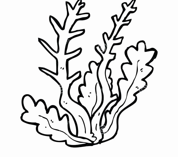 Seaweed Drawing Free Download Best Seaweed Drawing On