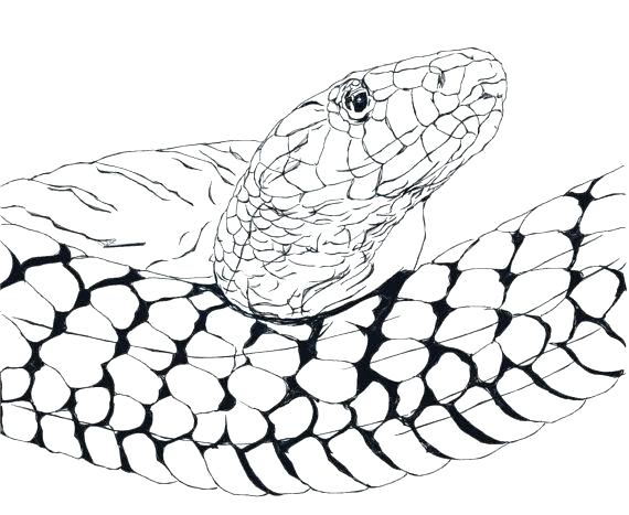 570x467 how to draw a anaconda snake