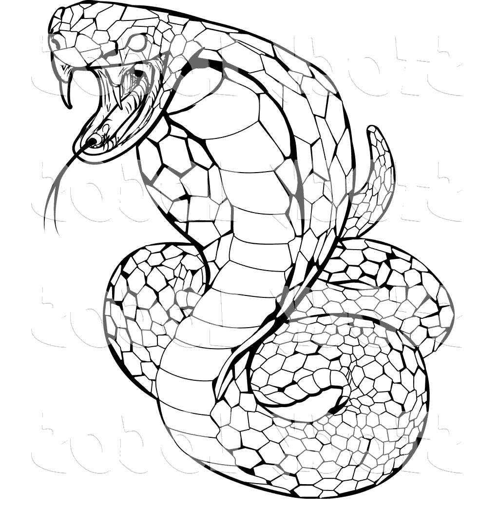 1024x1044 anaconda snake clipart realistic snakes drawing pictures
