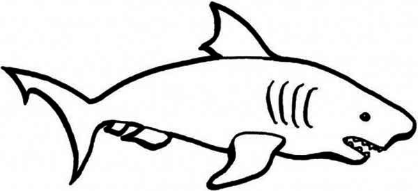 Shark Drawing For Kids