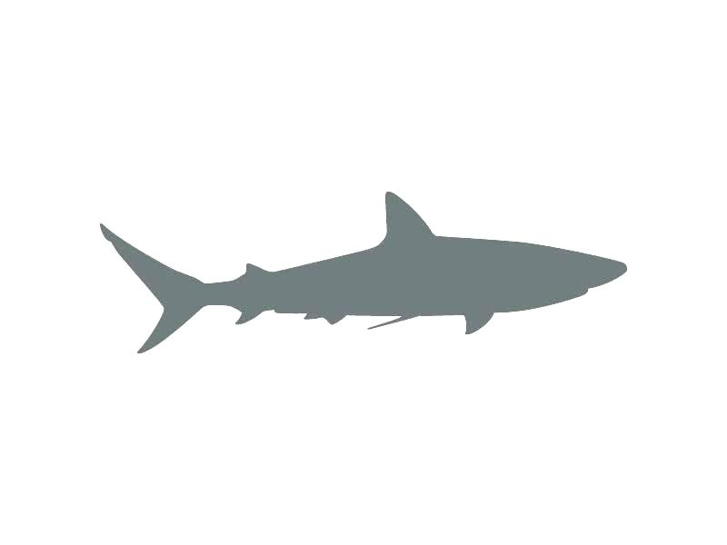 photo regarding Shark Stencil Printable titled Shark Drawing Template Absolutely free obtain least difficult Shark Drawing