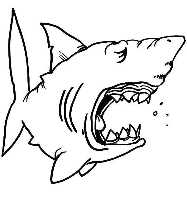 600x670 hungry shark coloring pages hammerhead shark line drawing hungry