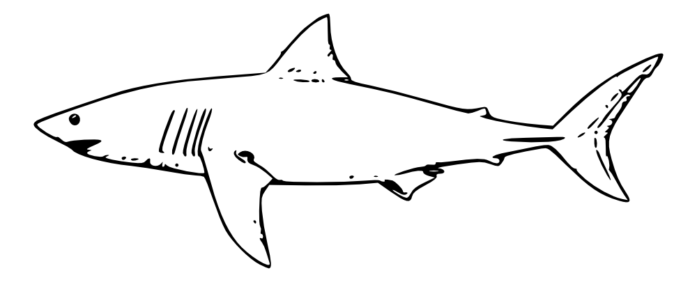 It's just an image of Free Printable Shark Coloring Pages with angel shark