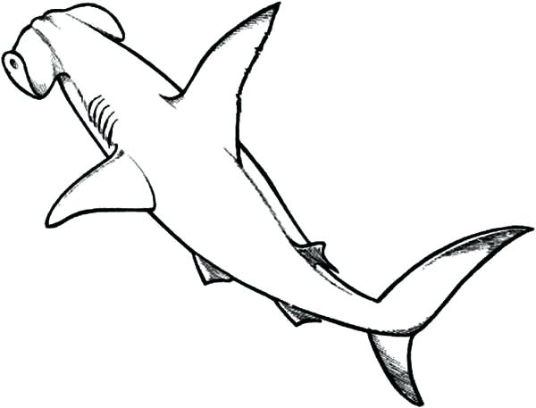 600x457 hungry shark coloring pages hammerhead shark line drawing hungry