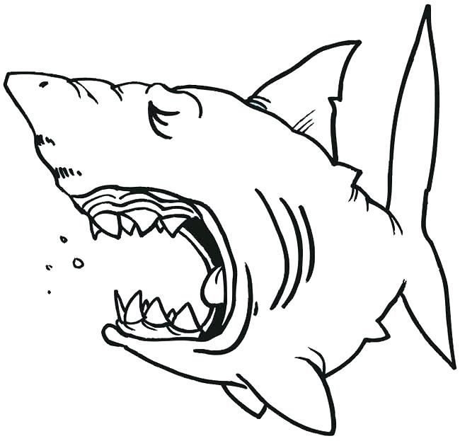 650x623 shark mouth outline shark jaw silhouette shark mouth open outline