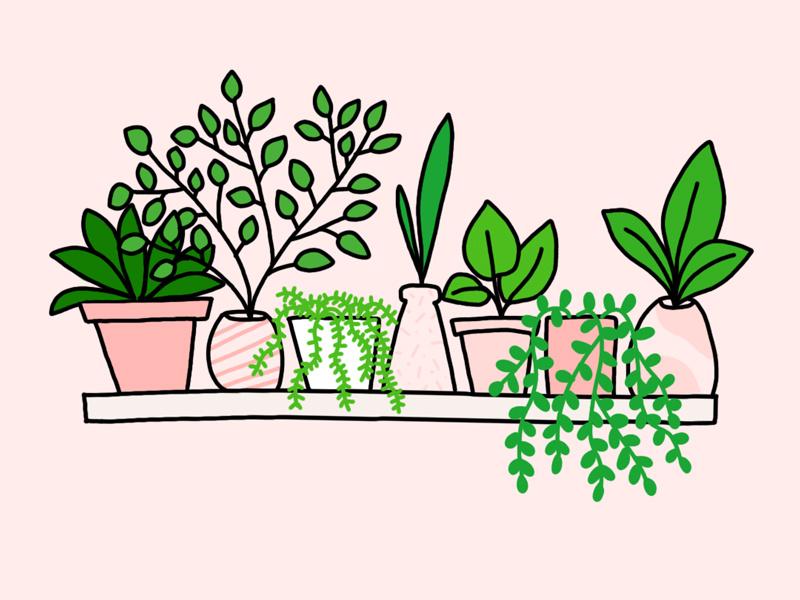 800x600 Plant Shelf