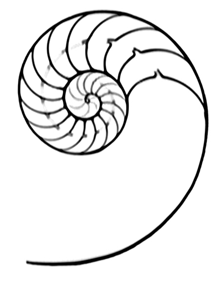 Shell Line Drawing
