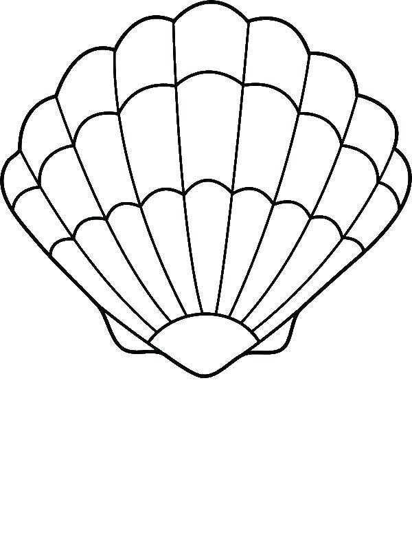 Shell Line Drawing Free Download Best Shell Line Drawing