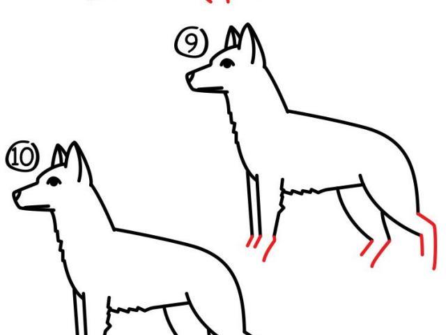 640x480 Free Drawn German Shepherd, Download Free Clip Art