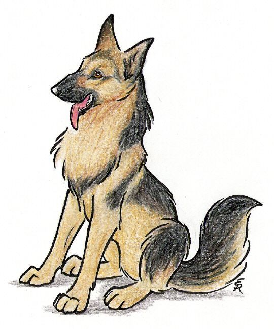 540x648 German Shepard Drawing Art And Helpful Drawing Ideas