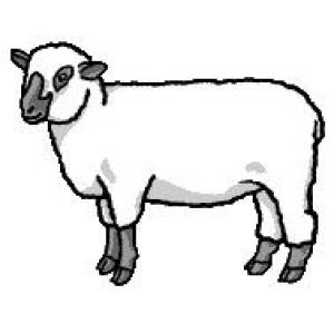 300x300 Sheep Shepard Diocesan