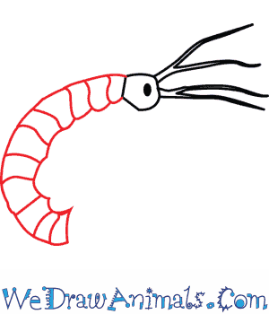 300x350 How To Draw A Freshwater Shrimp