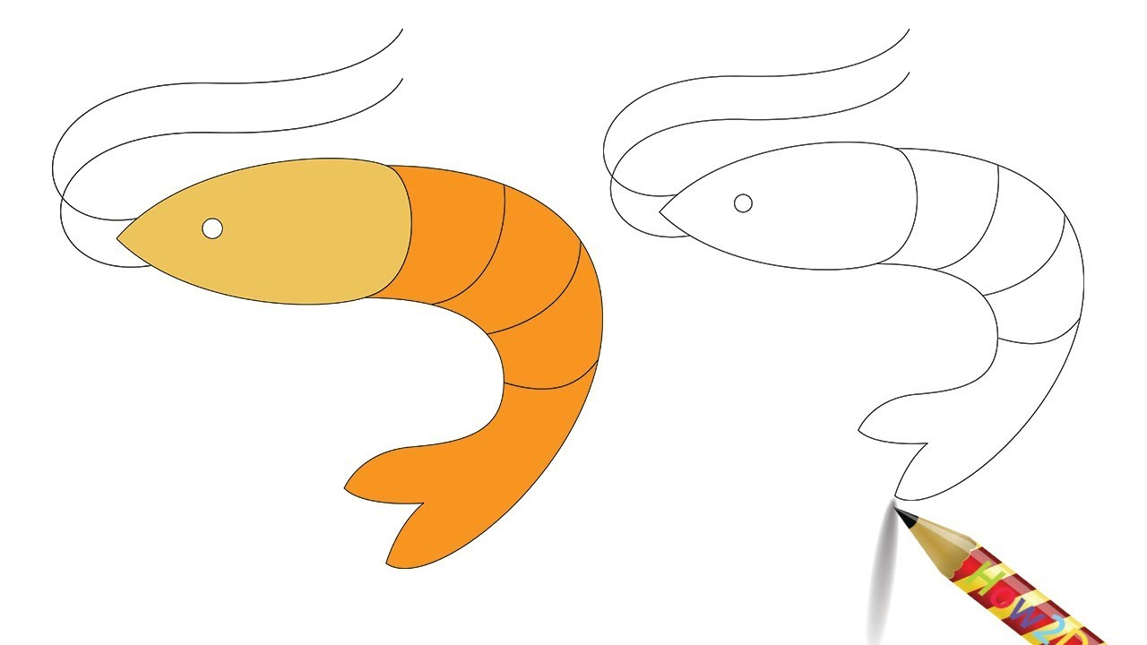 1280x720 How To Draw A Shrimp Easy Drawing Prawn