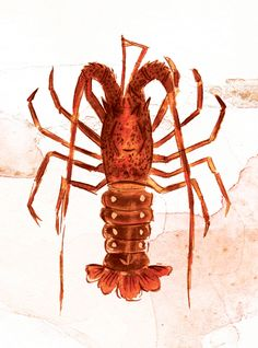 236x318 Best Shrimp Images Shrimp, Drawing S, Drawings