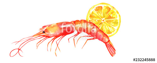 500x203 A Watercolor Drawing Of A Shrimp With A Lemon Slice, Isolated