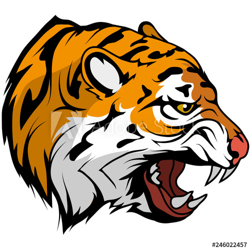 500x500 tiger head vector drawing, tiger face drawing sketch, tiger head