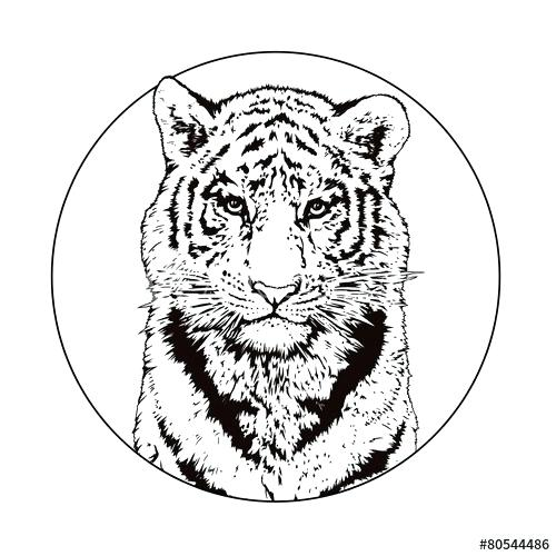 500x500 bengal tiger drawing white tiger bengal tiger drawing easy