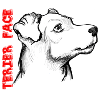 350x350 How To Draw A Terrier's Face Dog's Face With Easy Steps
