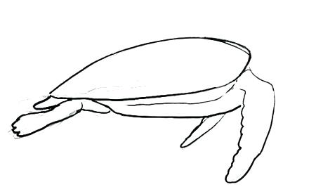 450x276 easy turtle drawing sea turtle side view drawing easy ninja turtle
