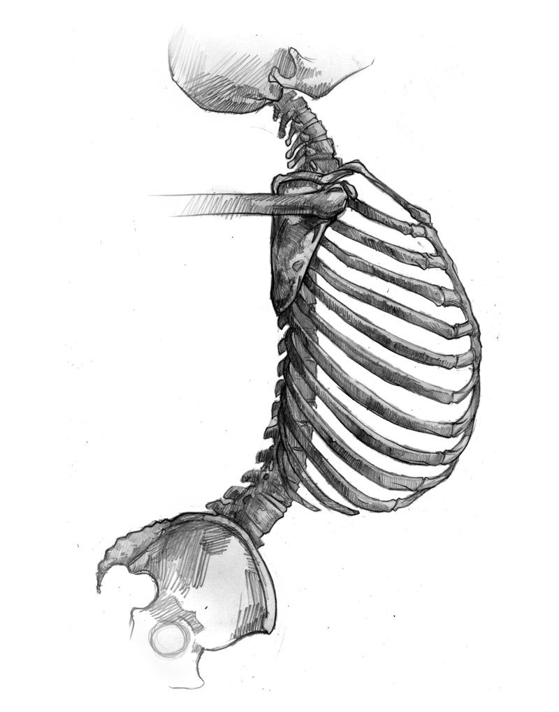 800x1020 Skeleton Side View Drawing