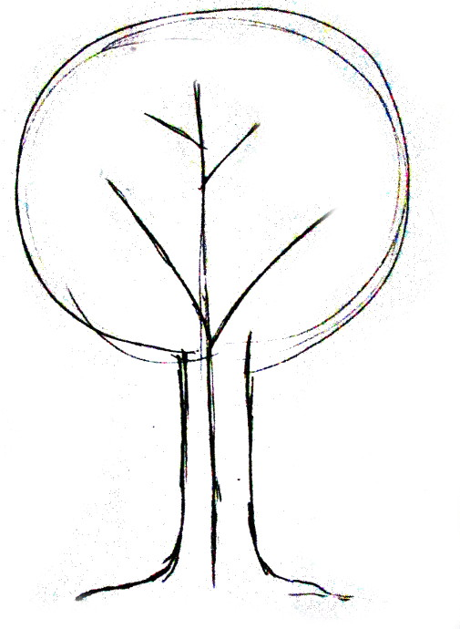 505x690 How To Draw A Tree