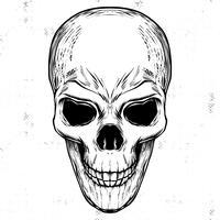 200x200 Skeleton Free Vector Art