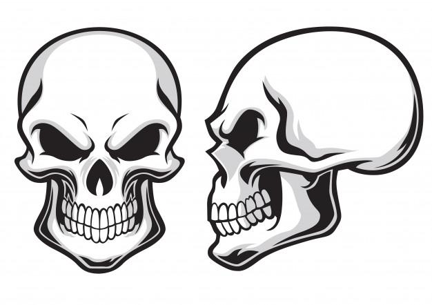 626x442 Skull Vectors, Photos And Free Download