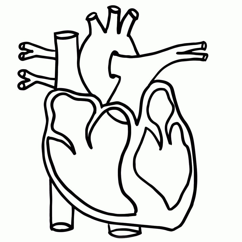 Simple Anatomical Heart Drawing | Free download on ClipArtMag