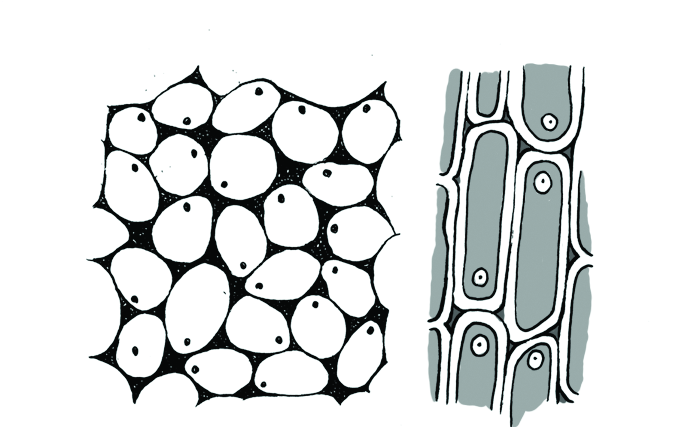 Simple Animal Cell Drawing | Free download on ClipArtMag