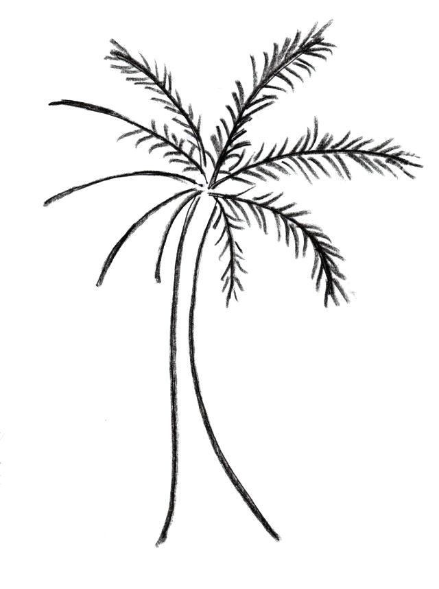 640x859 simple palm tree drawing how to draw a palm tree simple palm tree
