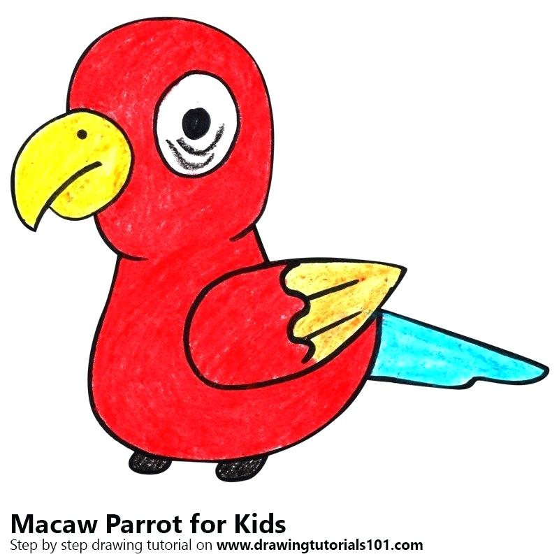 800x800 Easy To Draw Parrot Step