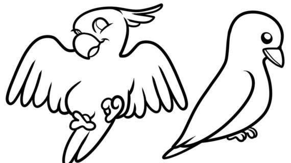 570x320 Photos Birds Drawing Simple