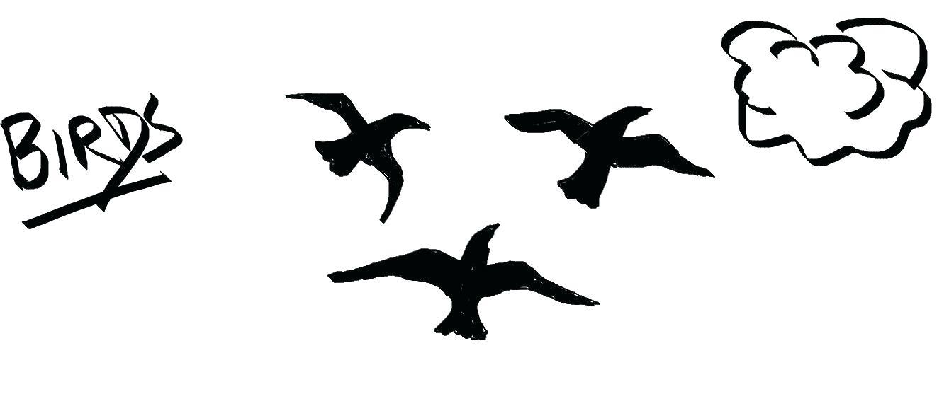 1339x557 How To Draw A Bird Kids