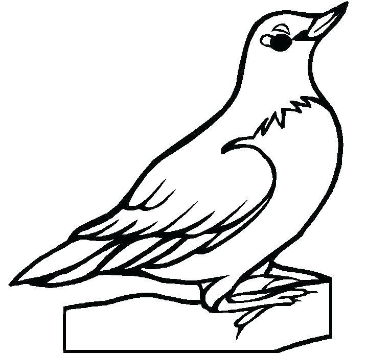 718x693 easy bird to draw humming bird flying pencil drawing easy bird