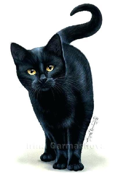 407x600 Black Cat Drawing