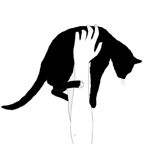 500x500 Black Cat
