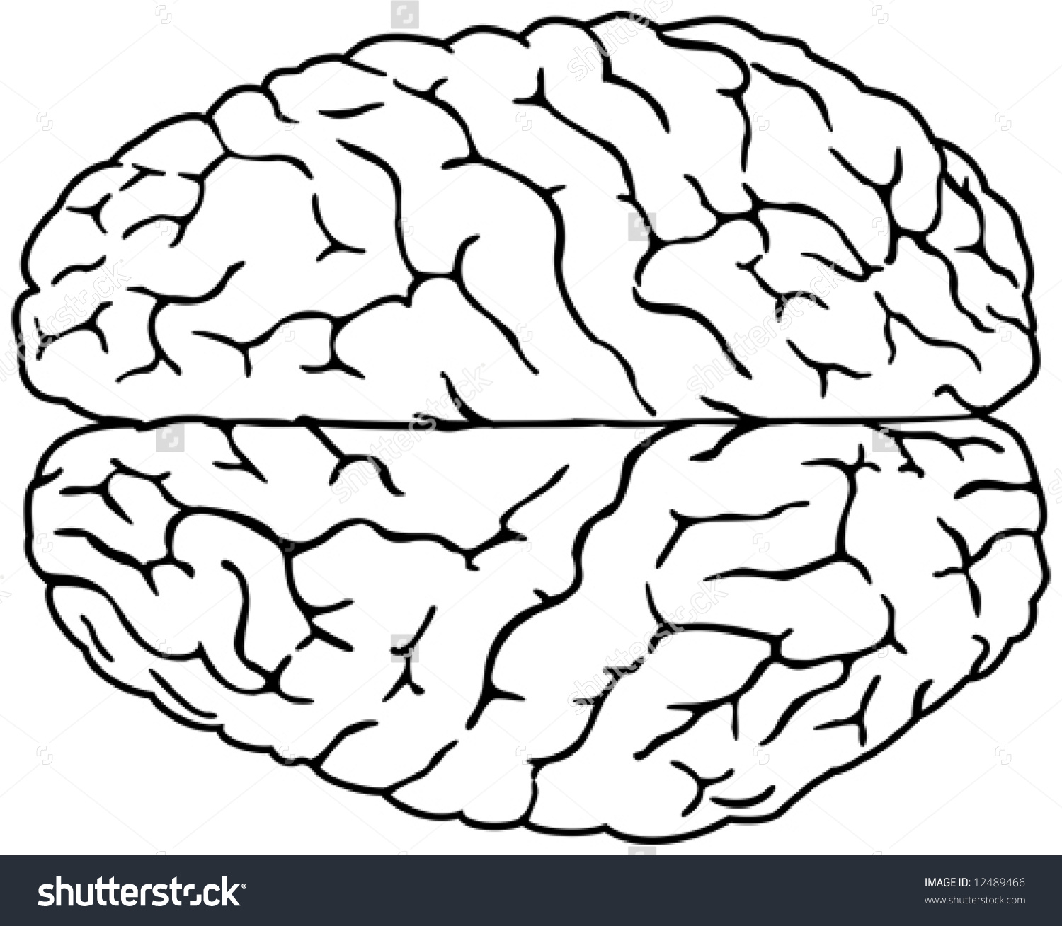 Simple Brain Drawing   Free download on ClipArtMag