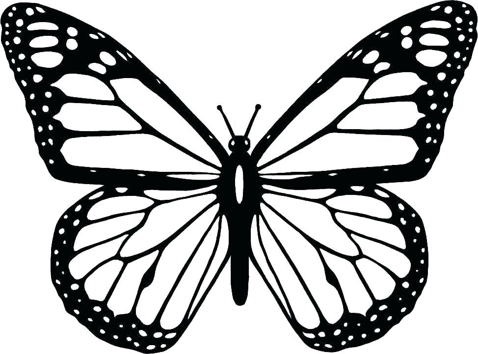 Simple Butterfly Drawing Free Download Best Simple Butterfly