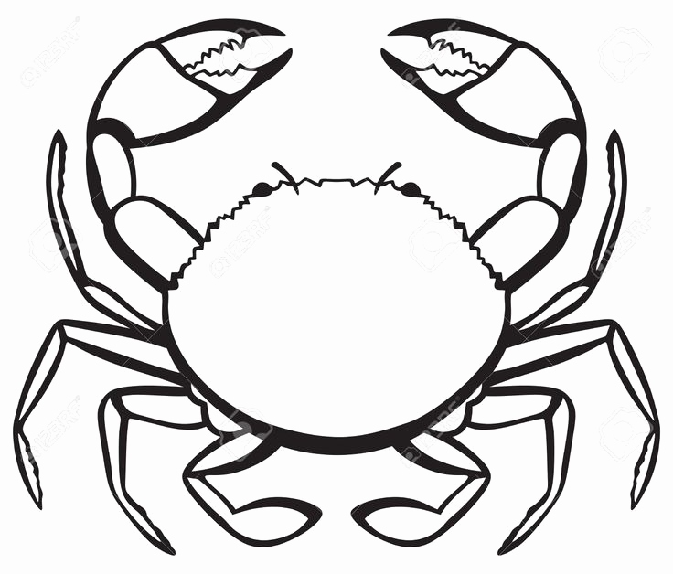 Simple Crab Drawing
