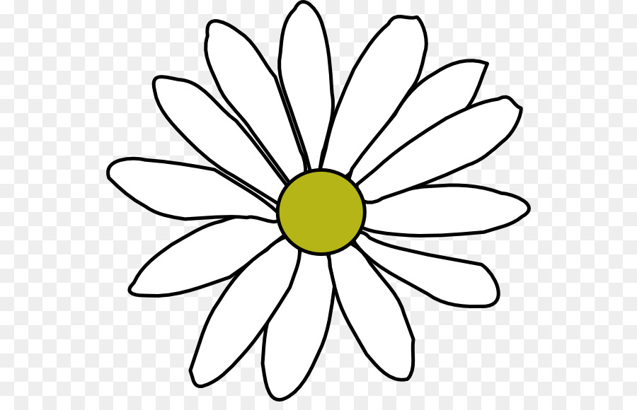 900x580 Drawing, Flower, White, Transparent Png Image Clipart Free Download