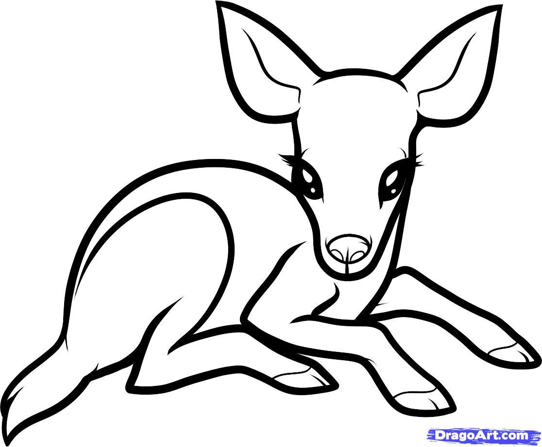 1116x922 Deer Drawing Step