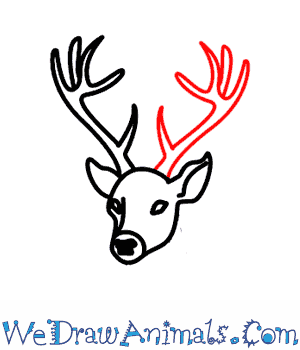 300x350 How To Draw A Deer