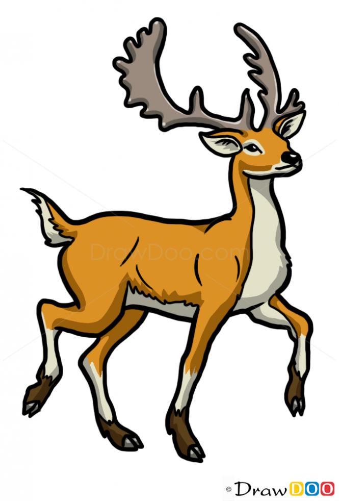 665x982 How To Draw Deer, Wild Animals Deer Drawing, Drawings, Deer