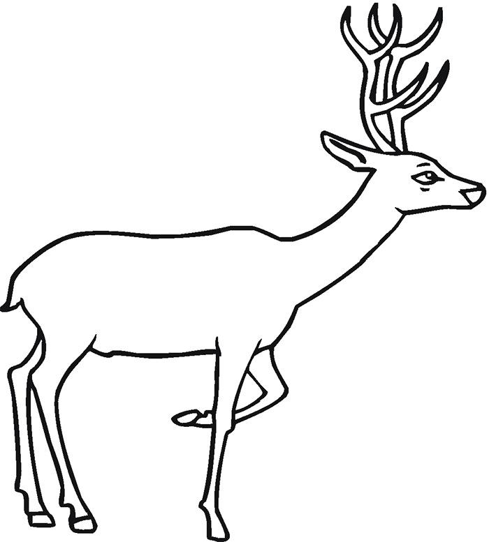 700x777 Deer Templates