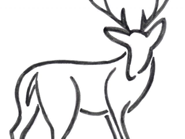 640x480 Simple Clipart Deer