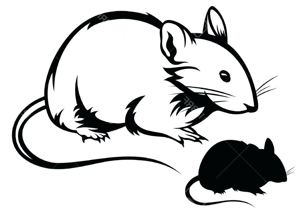 1024x716 Easy To Draw Rat Lali