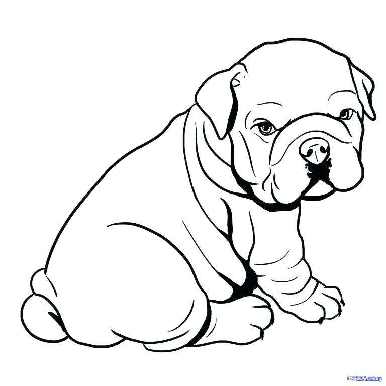 768x768 draw pet animals how to draw animals easy to draw pet animals