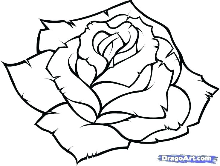 Simple Flower Drawing Step By Step   Free download on ClipArtMag