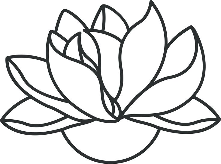 736x547 Lotus Flower Line Drawing Free Download Clip Art