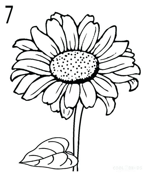 497x600 Simple Sunflower Drawing How To Draw Sunflowers Simple Sunflower